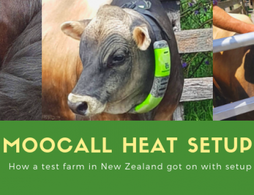 Moocall HEAT launches test farm in New Zealand